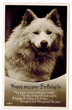 Happy May Your Birthday Be  Dog [100160] - $4.75 : Old Postcards In Time, Online source for old and antique postcards