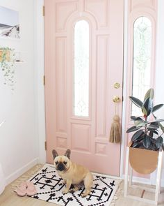 2,413 mentions J'aime, 143 commentaires – Cara Irwin // Goldalamode (@goldalamode) sur Instagram : « I'm convinced the dogs have a secret calendar somewhere. Weekends = walks. Roux is waiting at the… »
