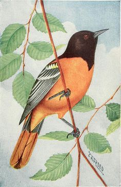 """The Canadian bird book : illustrating in natural colors more than seven hundred north American birds, also several hundred photographs of their nests and eggs"""" (1914"""