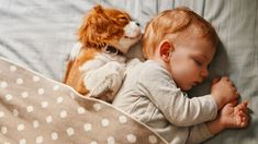 Cavalier King Charles spaniel puppy, spooning with his human baby sibling Sleeping Puppies, Baby Puppies, Baby Dogs, Cute Puppies, Cute Dogs, Doggies, Cavalier King Charles Dog, King Charles Spaniel, Cute Animal Videos