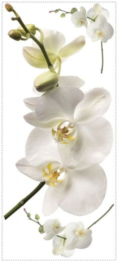 White Orchid Giant Wall Decals for students living in dorm rooms or apartments at college or boarding school, on campus or off.