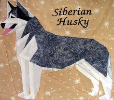 Paper pieced Siberian (Brenda H. dog was used as the model for the pattern) I have this made up & given to me I need to learn how to paper piece !!! silver linings canine corner siberian husky -