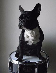 Musical Dog!