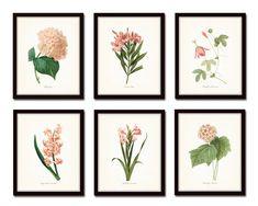 Pink Botanical Print Set No. 2 Redoute Botanical Prints