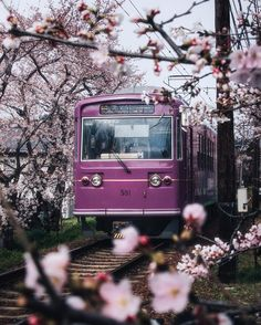 Apr 2020 - All of the visual inspiration you need to kick your wanderlust into high gear. See more ideas about Travel, Travel images and Travel and leisure. Japan Cherry Blossom Season, Cherry Blossom Tree, Blossom Trees, World Photography, Canon Photography, Travel Photography, Photography Photos, Lifestyle Photography, Monuments