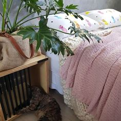 A caminha da Gaia agora fica ao lado da nossa ♡ #casa #apartamento #minhacasa #quarto #quartodecasal #decor #decoração #decoracao #urbanjunglebloggers #urbangarden #indoorplants #roupadecama #lovepets #lovedecor #cat #gato #myhome #homesweethome #bedroomdecor #bedroom #cimentoqueimado #interiordesign #interiordecor #ideiascriativas #decoracaocriativa #diariodedecoracao