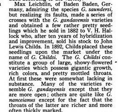 Max Leichtlin of Baden Baden Germany admiring the species G. saundersi but realizing its faults made a series of crosses with the G. gandavensis varieties and obtained a few rather pretty seedlings which he sold in 1882 to V. H. Hallock who after ten years of hybridization and improvement sold his stock to John Lewis Childs. In 1892 Childs placed these seedlings upon the market under the name of G. Childsi. Source: _The Modern Gladiolus Grower_ 3(7):  103(July 1916) Madison Cooper, Calcium…