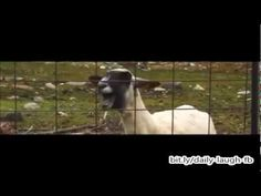 Trouble (goat) - Taylor Swift