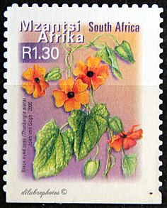 Republic of South Africa.  FISH, FLOWERS & BIRDS. BLACK EYED SUZY.  Scott 1229 A384, Issued 2001 May 16,  Booklet Stamp, Die Cut, Perf. 13 x 12 1/2 on 2 or 3 Sides, 1.30c.