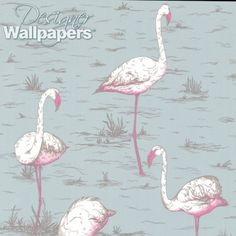 Flamingos wallpaper Cole and Sons