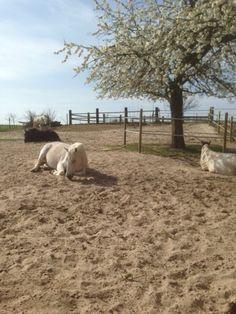 Paddock of paddock paarden paradise?