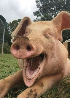 Livin' high on the hog!