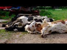 Chronisch vergiftet - Monsanto und Glyphosat (ARTE Doku) - YouTube