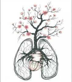 Lungs and heart drawing