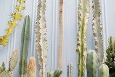 White, Texture, Green, Yellow, Cactus, Line,