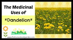 Dandelions are more than just pesky weeds. In fact, did you know that they have some pretty amazing medicinal uses? Learn more about their medicinal properties here.