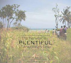 harvest is plentiful | quote | haiti