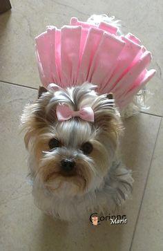 Yorkie Pink #dogs #pets #yorkie