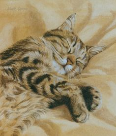 Snoozing in the sun by Marie Curran