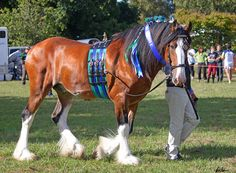 Clydesdale 10 by Sooty-Bunnie on DeviantArt