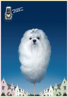 Sweet-white-dog