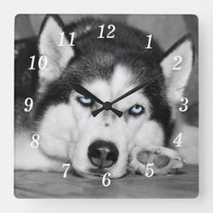 Let Me Sleep Please Square Wall Clock Pet Dogs, Pets, Beautiful Blue Eyes, Dog Photography, Wall Clocks, Husky, Black And Grey, Sleep, Let It Be