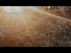 Sisäisen rauhan meditaatio (10 min) - YouTube