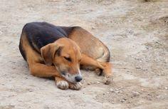 Apen matkat: Kiertomatkan osa 21, musiikkia, eläimiä ja lapsia Guatemalan rajalla 21st, Dogs, Animals, Animales, Animaux, Pet Dogs, Doggies, Animal, Animais