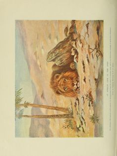 Animal Life and the World of Nature: A Magazine of Natural History Throughout the World, Vol 2, 1903-1904.