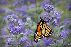 Attract more beautiful butterflies with these flowering shrubs. You'll also get easy-care vibrant color to fill your garden! Pink And White Flowers, Tiny Flowers, Summer Flowers, Red Flowers, Low Growing Shrubs, Low Maintenance Shrubs, Flowering Bushes, Hibiscus Rosa Sinensis, Butterfly Bush