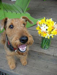 Happy Spring from Wyatt!