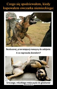 Funny pictures about This Is Why I Love German Shepherds. Oh, and cool pics about This Is Why I Love German Shepherds. Also, This Is Why I Love German Shepherds photos. Baby Animals, Funny Animals, Cute Animals, German Shepherd Facts, German Shepherds, German Shepherd Training, I Love Dogs, Cute Dogs, Big Dogs