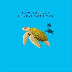 I am Turtle in love with you.