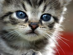 It's almost #kitten season again. Hope more cities will adopt TNR to reduce the # of kittens needing homes ....