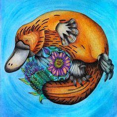 #exotischerurwald #exotickyprales #goodwivesandwarriors #platypus #coloring…
