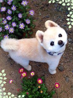 #wanko shunsuke 飼い主さんを見上げることが多いワンコたち。慢性的な首凝りです  https://www.facebook.com/yasuko.takahashi.969