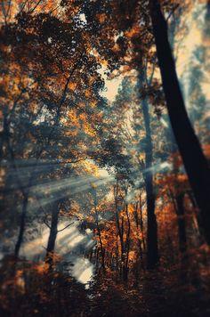 Les couleurs de l'automne /Martine Haddouche/