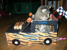 Tygers tiger-rific Cardwood Derby entry #cardwoodderby