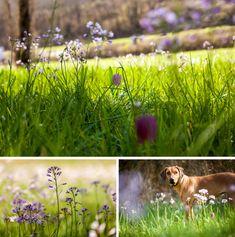 Ein Spaziergang / A walk on the wild side – Annettes Garten / Annette's Garden