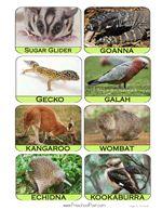 Free Australian Animal And Bird Flashcards