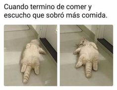 Memes hilarious jokes 32 ideas for 2019 Funny Texts, Funny Jokes, Funny Images, Funny Pictures, Funny Spanish Memes, Memes In Real Life, New Memes, Relationship Memes, Funny Animals