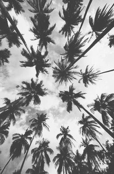 Image via We Heart It https://weheartit.com/entry/166847568 #Miami #palm #party #summer #trees #vacation