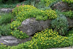 Plantjes & kunstige stenen in de rotstuin - Aanleg rotstuin - Rotstuin aanleggen