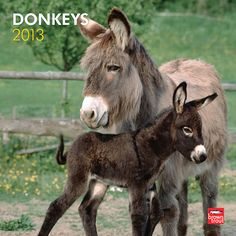 Donkeys Wall Calendar: Whether you call it a jackass, burro, jack, jenny, or donkey, the donkey's hardworking demeanor isn't likely to change. The donkey has historically been an important animal in many cultures and continues to be an exceptionally helpful domesticated animal on field and farm.  $14.99  http://calendars.com/Farm-Animals/Donkeys-2013-Wall-Calendar/prod201300004279/?categoryId=cat00340=cat00340#