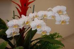 fotos de orquideas - Pesquisa Google