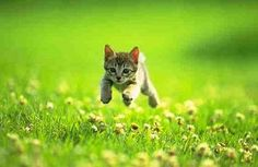 Minecraft ideas real life this reminds me of Stampy for some reason. - stampylongnose Ca running from Creepers Minecraft party ideas Funny Cats, Funny Animals, Cute Animals, Funniest Animals, Cute Kittens, Cats And Kittens, Creepers, Minecraft Kunst, Minecraft Cat