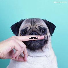 Hands-On-Pug Print Pillowcase Pug Shirt, Hoodie, Pug Mug, Animal Tails, Pugs And Kisses, Pug Pictures, Super Cute Animals, Best Dog Breeds, Pug Puppies