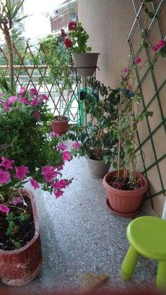 My little garden in my tiny balcony