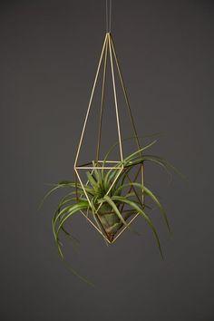 Hanging plant terrarium.