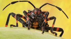 Galería | A detalle National Geographic en Español. Una chinche. Foto: Luciano Richino.